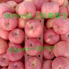 【峻农果品】烟台栖霞红富士苹果85-90mm优质果9个净重5.7斤包邮包售后