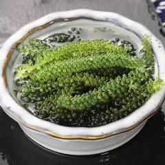 盐渍海葡萄新鲜即食海藻绿色鱼子酱长寿菜海洋蔬菜植物100g