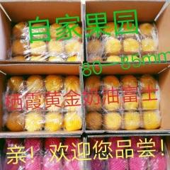 【峻农果品】烟台栖霞黄金奶油富士苹果80mm24个净重10斤包邮包售后