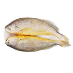 边走边淘 东海冰鲜大黄鱼  700g(2条*350g) 包邮