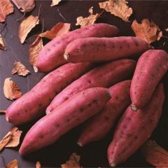 海南桥头地瓜新鲜农家红薯沙土黄心香甜粉糯番薯10斤