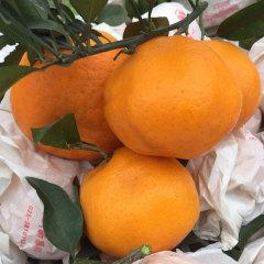 【新鲜水果】四川 浦江耙耙柑 8斤大果 约18粒以内 热卖网红水果