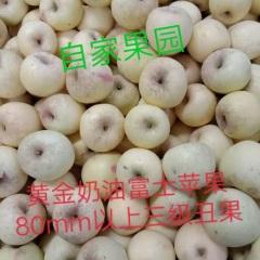【峻农果品】烟台栖霞黄金奶油富士80----85mm丑果9---12个6斤装包邮包售后
