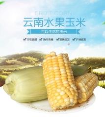 云南水果玉米 5斤现摘现发新鲜甜玉米棒生吃蔬菜包邮