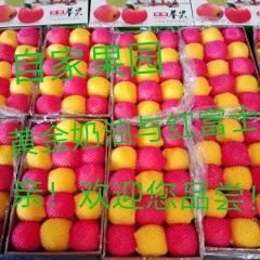 【峻农果品】栖霞红富士与黄金奶油富士苹果15个搭配装净重8.5斤包邮包售后