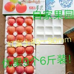 【峻农果品】烟台栖霞红富士苹果85-90mm优质果9个6斤装包邮包售后