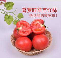 边走边淘 山东海阳普罗旺斯西红柿 5斤 包邮