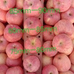 【峻农果品】烟台栖霞红富士苹果80mm优质果24个净重10斤包邮包售后