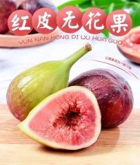 【现摘现发】云南红皮无花果3斤净重 新鲜当季水果紫青皮大果包邮