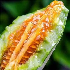 【脆甜】甜瓜中的爱马仕 羊角蜜 清甜可口 脆甜多汁 营养丰富