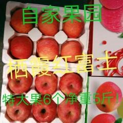 【峻农果品】烟台栖霞红富士苹果特大优质果6个净重5斤包邮包售后